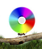 Ant carrying CD Royalty Free Stock Photography