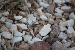 Ant on the rock Stock Photography