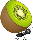 Ant Carrying Kiwi Stock Images