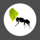 Ant Carrying a Leaf Element Stock Images