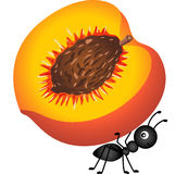 Ant carrying a peach Stock Photography