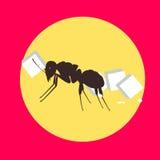 Ant Carrying Sugar Cube Fotos de archivo