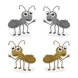 Ant Cartoon Vector. Ant vector illustration set with cute and simple design Royalty Free Stock Photos