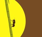 Ant Climbing auf Zuckerrohr Lizenzfreie Stockfotografie
