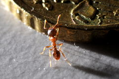Ant climbing on coin. Macro view of ant climbing on gold colored Euro coin royalty free stock photos