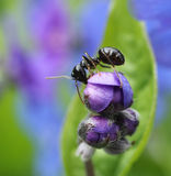 Ant climbing in colorful spring flower royalty free stock image