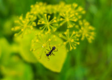 An ant Stock Images