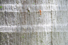Ant on coconut tree trunk texture background Stock Photos