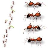 Ant stock illustration