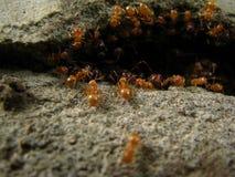 Ant Colony Fotografia Stock