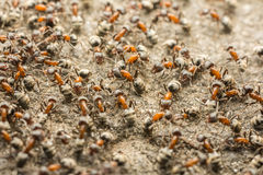 Ant Colony Stock Photography