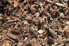 Ant colony Stock Photo