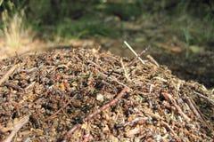 Ant colony Royalty Free Stock Photos