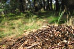 Ant colony Royalty Free Stock Photo