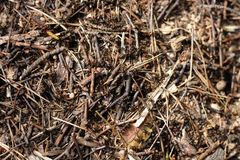 Ant colony background Royalty Free Stock Photos