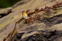 Ant. Colony in Thailand forest Stock Image