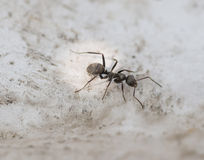 Ant on concrete surface. Stock Photo