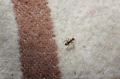 Ant on a cover Royalty Free Stock Images
