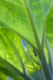 Ant Crawling up a Plant Stock Images