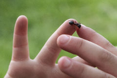 Closeup of Ant Crawling on Toddlers Hand Royalty Free Stock Images