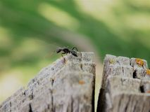 An Ant Crawls on a Fence Royalty Free Stock Images