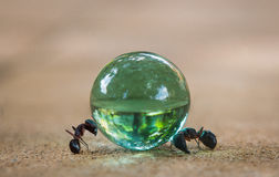 Ant and the Crystal ball Royalty Free Stock Photo