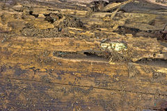 Ant damaged wood board Stock Images