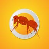 Ant Dish Image libre de droits