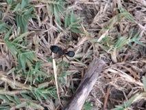Ant doing struggle Stock Photos