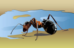 Ant. 2 drinking water from a puddle Royalty Free Stock Photography