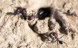 Ant on dry ground. macro. In the park in nature Stock Images