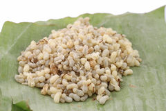 Ant eggs. Ant egg on banana leaf and white background Royalty Free Stock Images