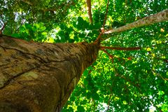 Ant eye view of big tree in rainforest background. And wallpaper stock photography