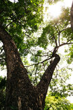 Ant eye view, trunk and branches of tree Royalty Free Stock Photography