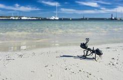 Ant figure Stock Photography
