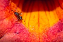 Ant working Royalty Free Stock Photo