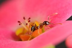 Ant on flower Stock Image