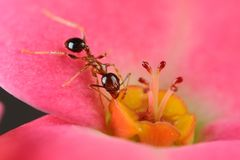Ant on flower Stock Photos