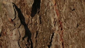 Ant and fly on a tree bark stock video