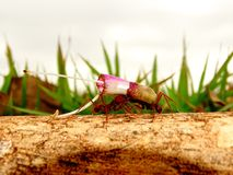 Ant. /formiga worker Stock Photos
