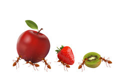 Ant and fruit on white Royalty Free Stock Image