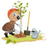 Ant Gardener planting tree. Seedling fruit tree. Apple tree sapling Stock Photo