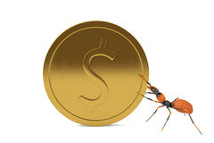 An ant with gold coins.3D illustration. An ant with gold coins 3D illustration Royalty Free Stock Image
