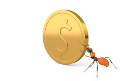 An ant with gold coins.3D illustration. An ant with gold coins 3D illustration Royalty Free Stock Images