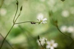 Ant on green branch of white flower stock photo