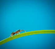 Ant and green grass Royalty Free Stock Image