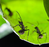 Ant on green leaf Stock Photography