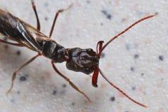 Ant Head stock photo