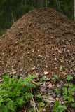 Ant hill Stock Photos