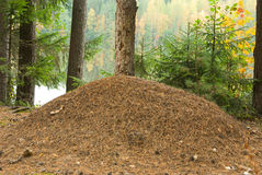Ant hill. The big ant hill on the bank of lake Stock Image